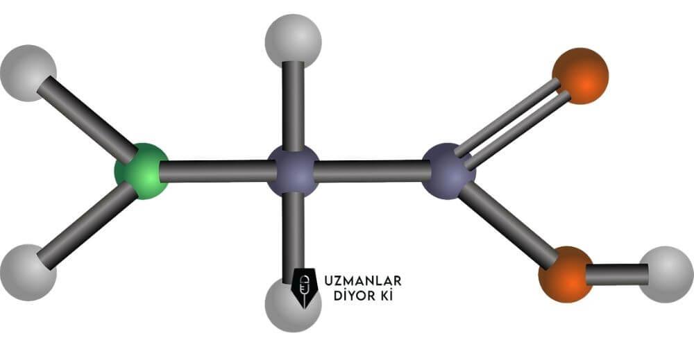 amino asit ne işe yarar