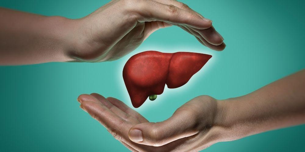 karaciğerin görevleri