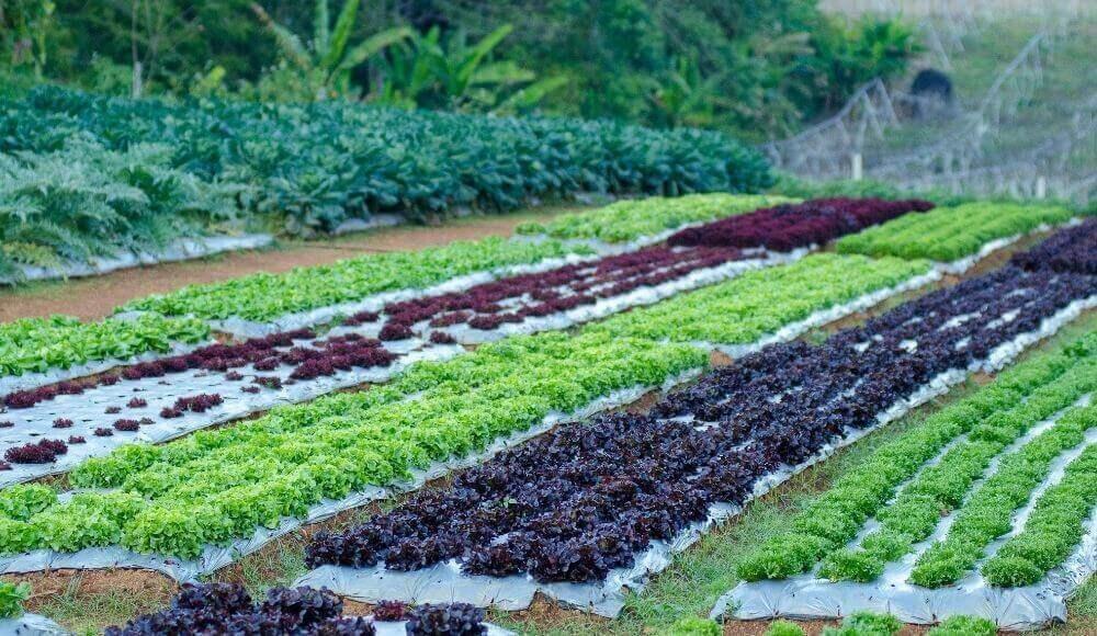 organik tarımın şartları