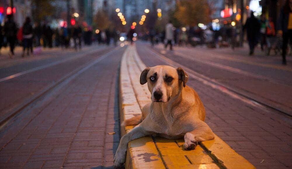 sokak hayvanları için neler yapabiliriz