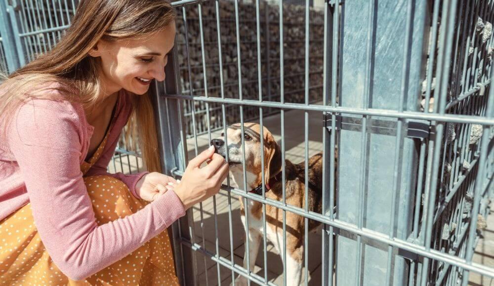 sokak hayvanları için neler yapılabilir