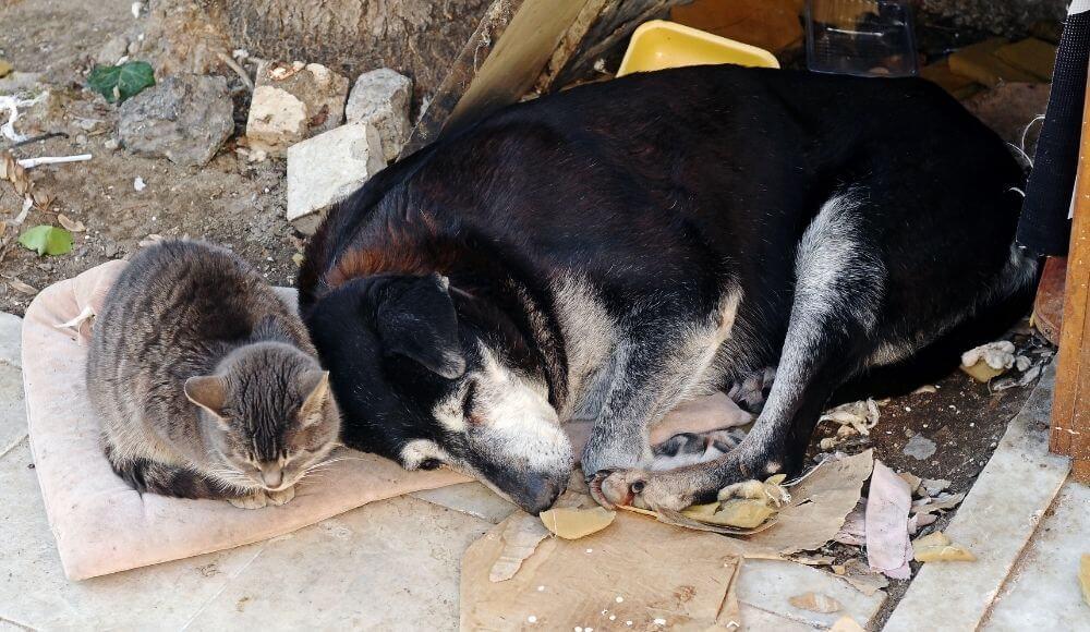 sokak hayvanlarının sorunları