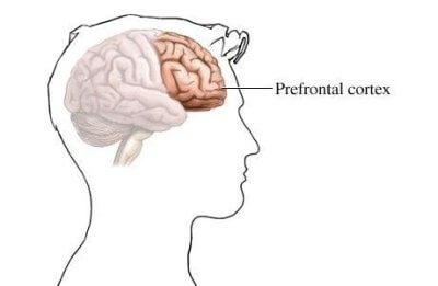 prefrontal korteks ön beyin