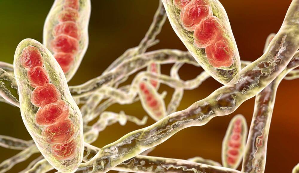 propolisin anti fungal etkisi