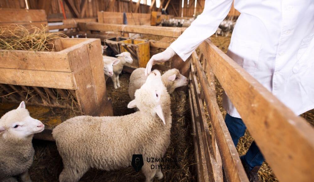 gıdada hayvan sağlığı