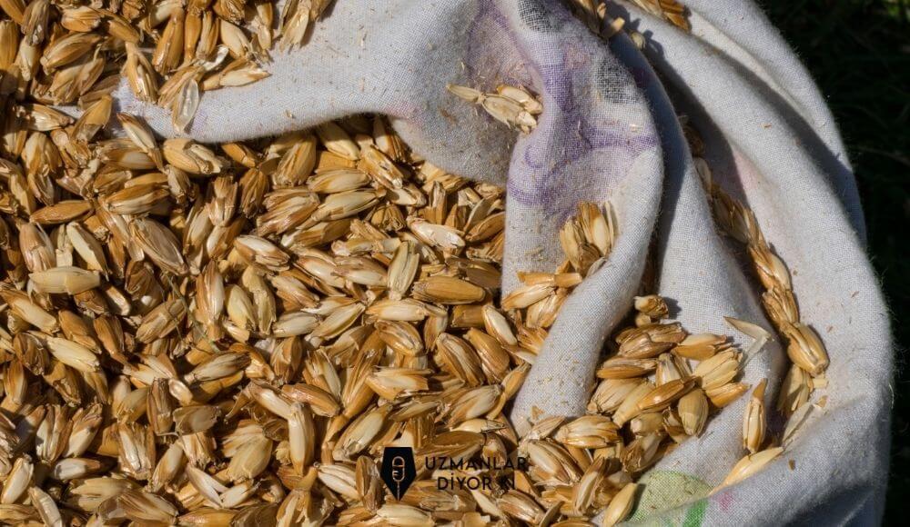 siyez buğdayı faydaları